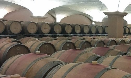 cat-Visitando al vino