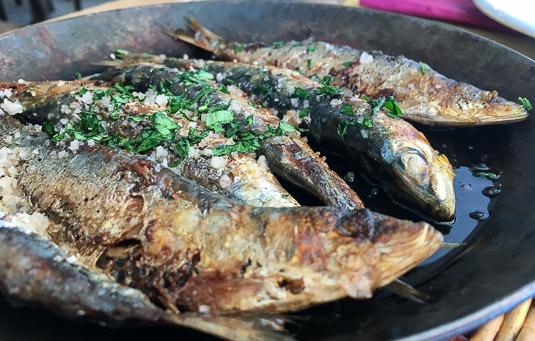 tragamar-sardinas
